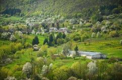Bewerkt het de lente landbouwlandschap met al type van bloesembomen in tuin onder heuvels - Coöperatieve vereniging - op de foto  Stock Foto's