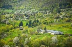 Bewerkt het de lente landbouwlandschap met al type van bloesembomen in tuin onder heuvels - Coöperatieve vereniging - op de foto  Royalty-vrije Stock Foto