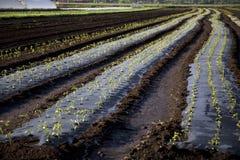 Bewerkte Grond op Landbouwbedrijf Royalty-vrije Stock Foto's