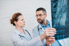 bewildered adult doctors examining stock images