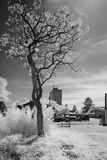 Bewildering Black and White Infrared Royalty Free Stock Photography