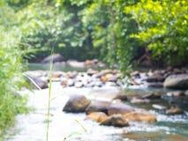 Bewirken Sie seitlichen 50mm Nikkor tropisches Wald-inTatton Nationalpark, Chaiya Stockfoto