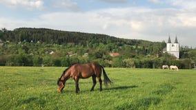 Bewirtschaften Sie mit Pferden und Pfarrhaus der evangelischen Kirche stock footage