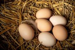 Bewirtschaften Sie Szene, Gruppeneier auf Stroh, Federn, die proteinreichen Eier, gesundes Lebensmittel, guter Lebensstil Glückli stockfotografie