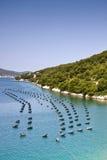Bewirtschaftende Miesmuscheln, Kroatien Stockbilder
