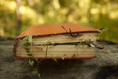 Bewitched Book With Magic plants and spider web, concept of mystery and spiritual.  royalty free stock image