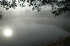 The bewitched lake. Wood lake in a dense fog royalty free stock images