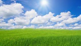 Bewölkte Landschaft der Wolke des blauen Himmels des grünen Grases des Reisfeldes Stockfoto