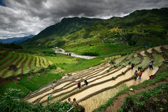 Bewohner des Arbeitens in den Reisterrassen Stockbilder