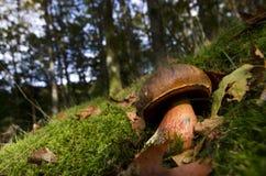 Bewohner des Waldes Stockfoto