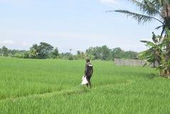 Bewohner subventionierten Düngemittel-Gebrauch von BULOG Lizenzfreies Stockfoto