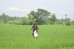 Bewohner subventionierten Düngemittel-Gebrauch von BULOG Stockfotografie