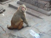 Bewohner von Swayambhunath Stockfotos