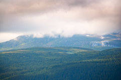 Bewolkt bergbos stock foto's