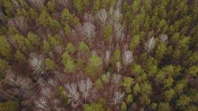 Bewolkt de lentebos van de weerherfst stock footage