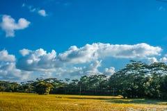 Bewolkt hemel en gebied royalty-vrije stock afbeelding
