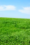 Bewolkt hemel en gras royalty-vrije stock afbeeldingen