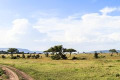 Bewolkt landschap in Serengeti Tanzania, Afrika Stock Fotografie
