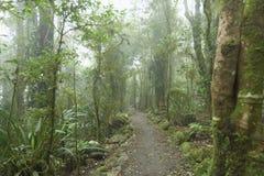 Bewolkt regenwoud. royalty-vrije stock fotografie