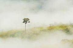 Bewolkt van de mist over berg Stock Foto