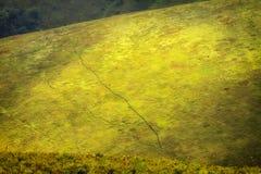 Bewolkt weer in de Oekraïense Karpaten, miststijgingen van het bos royalty-vrije stock afbeeldingen