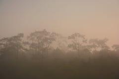 Bewolkt weer mistig bos royalty-vrije stock fotografie