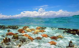 Bewolkte blauwe hemel en zeesterren onderwater Stock Afbeelding