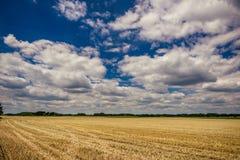 Bewolkte blauwe hemel over het gebied met geoogst graan Stock Foto
