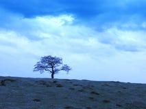 Bewolkte hemelen en boom stock afbeeldingen