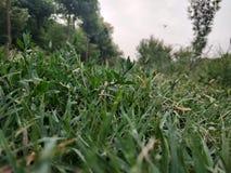 Bewonder het smaragdgroene gazon van de horizon stock foto's