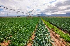 Bewässertes Feld Stockfoto