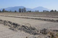 Bewässerungs-Gräben für Ernte-Entwässerung Lizenzfreie Stockfotografie