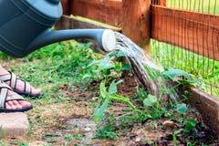 Bewässerungsanlagen Stockfoto