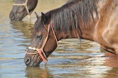 Bewässerungsloch auf dem Stift Lizenzfreies Stockfoto