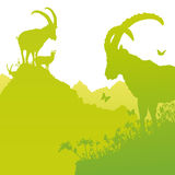 Íbex no montanhês Fotografia de Stock Royalty Free