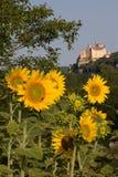 Beynac Schloss und Sonnenblumen Stockbild