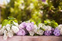 Bez jest biały i lily Winieta bez przeciw tłu Zdjęcia Royalty Free
