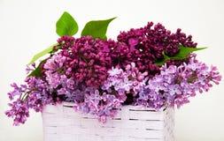 bez kwiatów Obraz Royalty Free