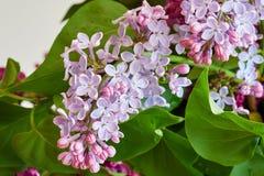bez kwiatów Fotografia Royalty Free
