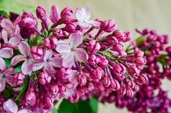 bez kwiatów Zdjęcie Royalty Free