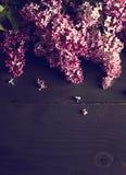 bez kwitnie na ciemnym drewnianym tle Zdjęcie Stock