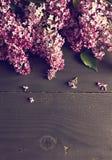 bez kwitnie na ciemnym drewnianym tle Fotografia Stock