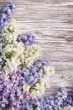 Bez kwitnie na drewnianym tle, okwitnięcie gałąź na rocznika drewnie Zdjęcie Stock