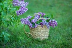 Bez kwitnie w kobiet rękach Lily kwiecenie Lilego Bush kwiat Bez kwitnie w ogródzie miękkie ogniska, Zdjęcie Stock