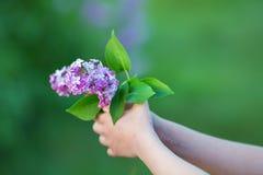 Bez kwitnie w kobiet rękach Lily kwiecenie Lilego Bush kwiat Bez kwitnie w ogródzie miękkie ogniska, Obraz Stock