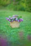 Bez kwitnie w kobiet rękach Lily kwiecenie Lilego Bush kwiat Bez kwitnie w ogródzie miękkie ogniska, Zdjęcie Royalty Free