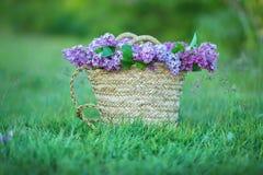 Bez kwitnie w kobiet rękach Lily kwiecenie Lilego Bush kwiat Bez kwitnie w ogródzie miękkie ogniska, Obrazy Stock