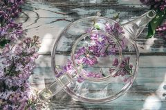 Bez kwitnie w przejrzystym szklanym teapot na b??kitnym starym drewnianym stole odg?rny widok fotografia stock