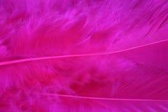 bez pióra różowy tło Obrazy Stock