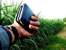 Bez zielonej trzciny, biznesy wytwarzaj? doch?d tak jak rolnicy zdjęcie stock